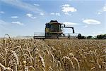 Thresher harvesting wheat Stock Photo - Premium Royalty-Free, Artist: Lloyd Sutton, Code: 649-05556006