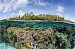 Over/under coral reef Stock Photo - Premium Royalty-Free, Artist: photo division, Code: 614-05556749