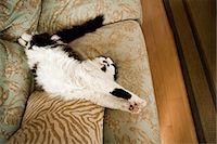 Cat stretching on a sofa Stock Photo - Premium Royalty-Freenull, Code: 614-05557347
