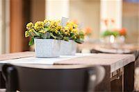 Kalanchoe on Table, Ontario, Canada Stock Photo - Premium Royalty-Freenull, Code: 600-05602733