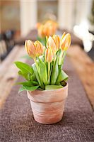 spring flowers - Tulips on Table, Ontario, Canada Stock Photo - Premium Royalty-Freenull, Code: 600-05602738
