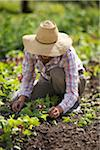 Farmer Working on Organic Farm Stock Photo - Premium Rights-Managed, Artist: Ron Fehling, Code: 700-05602719
