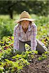 Portrait of Farmer Working on Organic Farm Stock Photo - Premium Rights-Managed, Artist: Ron Fehling, Code: 700-05602720