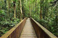 queensland - Boardwalk through Rainforest, Daintree National Park, Queensland, Australia Stock Photo - Premium Royalty-Freenull, Code: 600-05609639