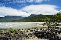queensland - Myall Beach, Daintree National Park, Queensland, Australia Stock Photo - Premium Rights-Managednull, Code: 700-05609671