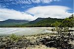 Myall Beach, Daintree National Park, Queensland, Australia Stock Photo - Premium Rights-Managed, Artist: Jochen Schlenker, Code: 700-05609671