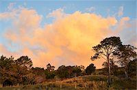 queensland - Countryside near Crediton, Queensland, Australia Stock Photo - Premium Rights-Managednull, Code: 700-05609683
