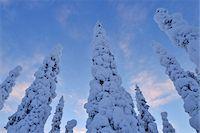 Kuusamo, Northern Ostrobothnia, Oulu Province, Finland Stock Photo - Premium Royalty-Freenull, Code: 600-05609971
