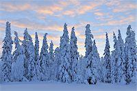 Kuusamo, Northern Ostrobothnia, Oulu Province, Finland Stock Photo - Premium Royalty-Freenull, Code: 600-05609972