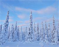 Kuusamo, Northern Ostrobothnia, Oulu Province, Finland Stock Photo - Premium Royalty-Freenull, Code: 600-05609973