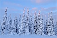 Kuusamo, Northern Ostrobothnia, Oulu Province, Finland Stock Photo - Premium Royalty-Freenull, Code: 600-05609974