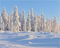 Kuusamo, Northern Ostrobothnia, Oulu Province, Finland Stock Photo - Premium Royalty-Freenull, Code: 600-05609980