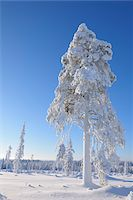 Kuusamo, Northern Ostrobothnia, Oulu Province, Finland Stock Photo - Premium Royalty-Freenull, Code: 600-05609994