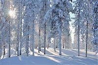 Kuusamo, Northern Ostrobothnia, Oulu Province, Finland Stock Photo - Premium Royalty-Freenull, Code: 600-05609999