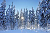 Kuusamo, Northern Ostrobothnia, Oulu Province, Finland Stock Photo - Premium Royalty-Freenull, Code: 600-05610001