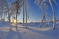 snow covered trees - Snow Covered Trees with Sun, Rukajarvi, Northern Ostrobothnia, Finland Stock Photo - Premium Royalty-Freenull, Code: 600-05610023