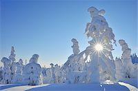 Sun through Snow Covered Trees, Rukatunturi, Kuusamo, Northern Ostrobothnia, Finland Stock Photo - Premium Royalty-Freenull, Code: 600-05610030