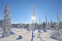 Sun through Snow Covered Trees, Kuusamo, Northern Ostrobothnia, Finland Stock Photo - Premium Royalty-Freenull, Code: 600-05610048