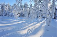 Snow Covered Trees, Kuusamo, Northern Ostrobothnia, Finland Stock Photo - Premium Royalty-Freenull, Code: 600-05610049