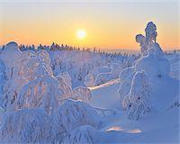 snow covered trees - Snow Covered Trees at Sunset, Rukatunturi, Kuusamo, Northern Ostrobothnia, Finland Stock Photo - Premium Royalty-Freenull, Code: 600-05610054