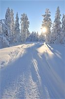 Snowmobile Trail, Kuusamo, Northern Ostrobothnia, Finland Stock Photo - Premium Royalty-Freenull, Code: 600-05610062