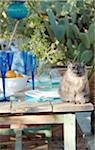 Cat on terrace table Stock Photo - Premium Royalty-Free, Artist: Cultura RM, Code: 689-05610435
