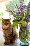 Sitting cat next to bunch of flowers Stock Photo - Premium Royalty-Freenull, Code: 689-05611365