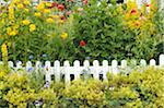 Blooming flowers at garden fence Stock Photo - Premium Royalty-Free, Artist: F1Online, Code: 689-05611929