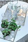 Trays with mineral water and potted plants Stock Photo - Premium Royalty-Free, Artist: Susan Findlay, Code: 689-05612277