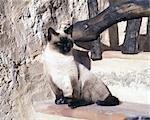 Cat sitting on step Stock Photo - Premium Royalty-Freenull, Code: 689-05612625