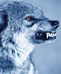 Snarling wolf (Canis Lupus), profile (Digital Enhancement) Stock Photo - Premium Royalty-Free, Artist: Robert Harding Images, Code: 6106-05638467