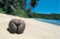 seychelles - Coconut on tropical beach Stock Photo - Premium Royalty-Freenull, Code: 6106-05639702