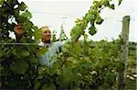 Man tending to vines in vineyard Long Island, New York, USA Stock Photo - Premium Royalty-Free, Artist: Masterfile, Code: 6106-05640536