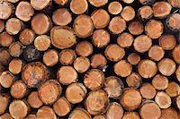 Pile of Logs, Scotland Stock Photo - Premium Royalty-Freenull, Code: 600-05641777