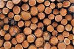 Pile of Logs, Scotland Stock Photo - Premium Royalty-Free, Artist: Michael Mahovlich, Code: 600-05641777