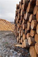 Piles of Logs, Scotland Stock Photo - Premium Royalty-Freenull, Code: 600-05641779