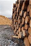 Piles of Logs, Scotland Stock Photo - Premium Royalty-Free, Artist: Michael Mahovlich, Code: 600-05641779