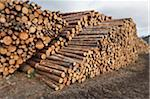 Piles of Logs, Scotland Stock Photo - Premium Royalty-Free, Artist: Michael Mahovlich, Code: 600-05641780