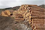 Piles of Logs, Scotland Stock Photo - Premium Royalty-Free, Artist: Michael Mahovlich, Code: 600-05641781