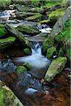 Stream, Oderteich, Sankt Andreasberg, Goslar, Harz, Lower Saxony, Germany