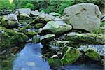Stream, Harz National Park, Okertal, Oker, Lower Saxony, Germany