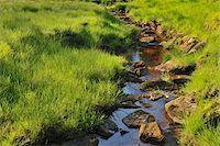 streams scenic nobody - Stream, Oderteich, Sankt Andreasberg, Goslar, Harz, Lower Saxony, Germany Stock Photo - Premium Royalty-Freenull, Code: 600-05642064