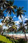 Beach, Amanwella Hotel, Tangalle, Sri Lanka Stock Photo - Premium Rights-Managed, Artist: R. Ian Lloyd, Code: 700-05642158