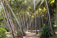 paradise (place of bliss) - Sunrays Through Palm Trees, Amanwella Hotel, Tangalle, Sri Lanka Stock Photo - Premium Rights-Managednull, Code: 700-05642159
