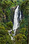 Devon Falls, Nuwara Eliya District, Central Province, Sri Lanka Stock Photo - Premium Rights-Managed, Artist: R. Ian Lloyd, Code: 700-05642228