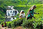 Tea Pickers at Tea Plantation by St. Clair's Falls, Nuwara Eliya District, Sri Lanka Stock Photo - Premium Rights-Managed, Artist: R. Ian Lloyd, Code: 700-05642235
