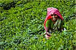 Portrait of Tea Picker, Nuwara Eliya District, Sri Lanka
