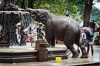 restrained - Elephant Being Washed in Public Fountain before Perahera Festival, Kandy, Sri Lanka Stock Photo - Premium Rights-Managednull, Code: 700-05642268