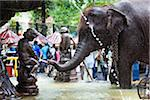 Elephant in Public Fountain prior to Perahera Festival, Kandy, Sri Lanka Stock Photo - Premium Rights-Managed, Artist: R. Ian Lloyd, Code: 700-05642269