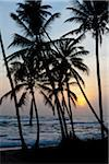 Silhouette of Palm Trees on Beach, Payagala South, Sri Lanka Stock Photo - Premium Rights-Managed, Artist: R. Ian Lloyd, Code: 700-05642568